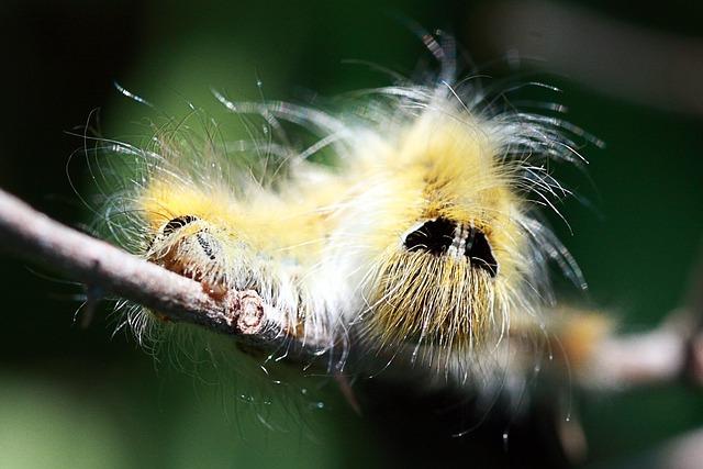 Animal, Nature, Wildlife, Insect, Little, Caterpillar