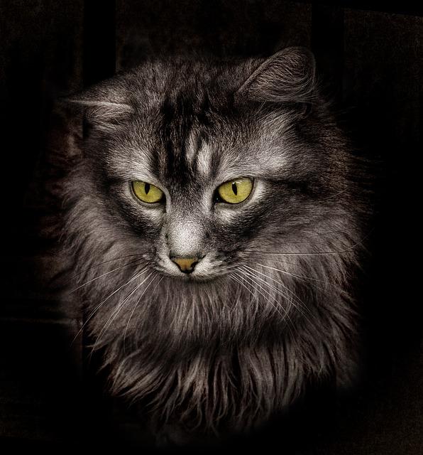 Cat, Cats, Black Cat, Animals