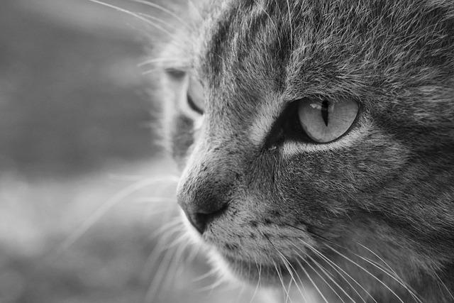 Cat, Bw, Animals, Pet, Cats, Cat's Eyes, Darling