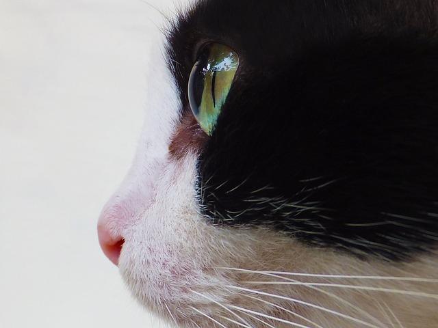 Cat, Cat's Eyes, Cat Face, Animal, Feline, Domestic