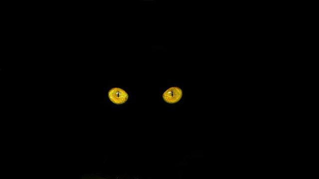 Cat's Eyes, Black Cat, Cat, Feline