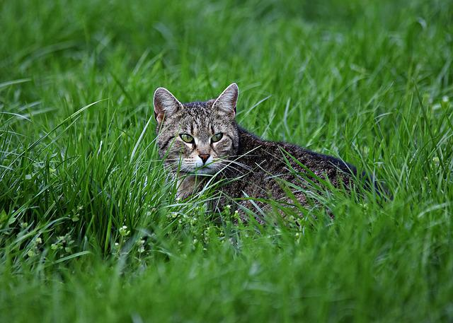 Cat, Grass, Cat's Eyes, Kitten, Nature, On The Grass