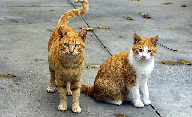 Cats, Animals, Pet, Pets, Cats Nose, Puppy