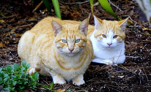 Cats, Animals, Pet, Pets, Cats Nose, Observing, Mammal