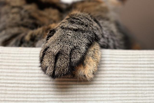 Cats Paws, Animal Paw, Cat's Paw, Paw, Animal, Pet