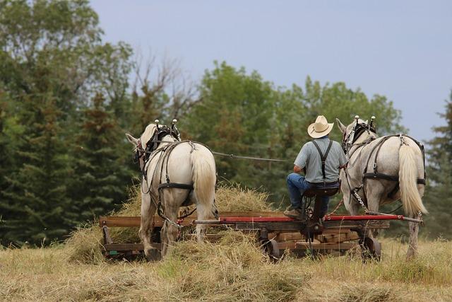 Cavalry, Farm, Mammal, Field, Nature