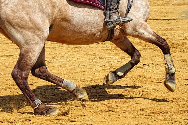 Cavalry, Contest, Action, Sport, Horse, Jumper, Fast