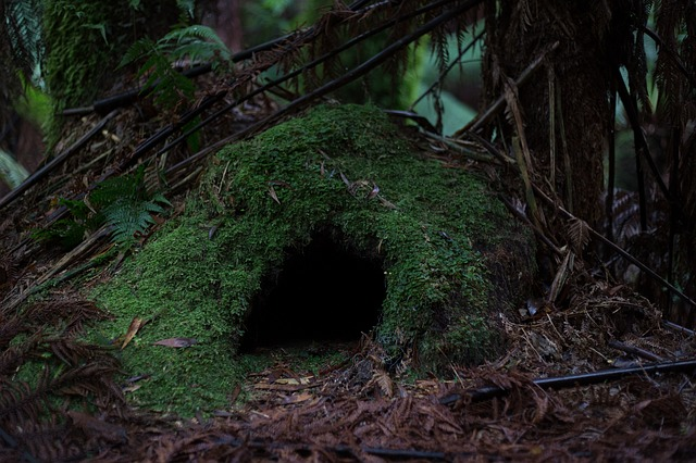 Cave, Forest, Moss, Nature, Woods, Entrance, Cavern