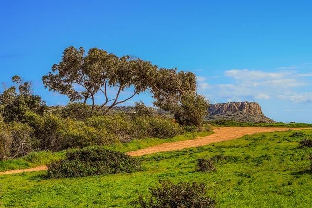 Cyprus, Cavo Greko, Dirt Road, Path, Nature, Tree