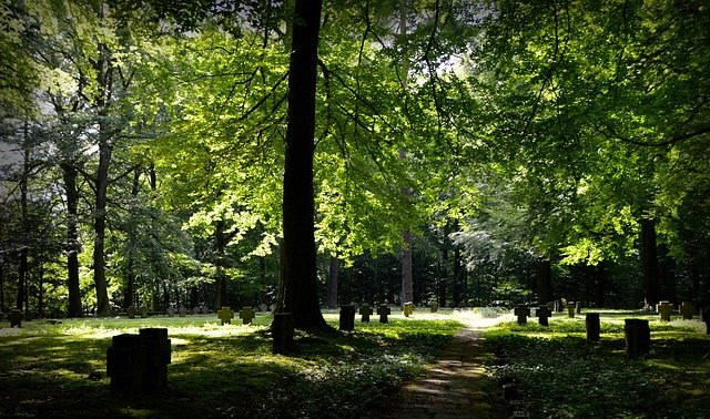 Forest, Commemorate, Memory, Crosses, Cemetery