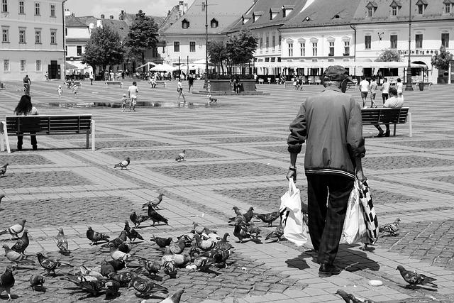 Sibiu, Center, Elder, Pigeons
