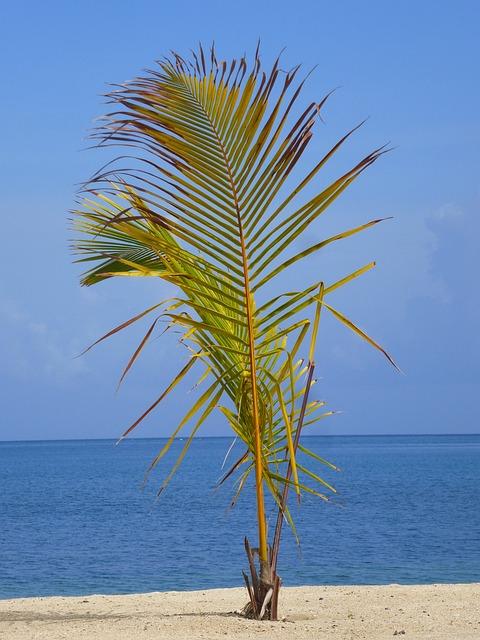 Honduras, Roatan, Bay Island, Central America
