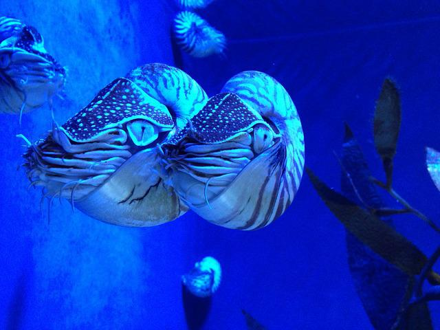 Nautilus, Animal, Cephalopods, Aquarium, Sea Animals