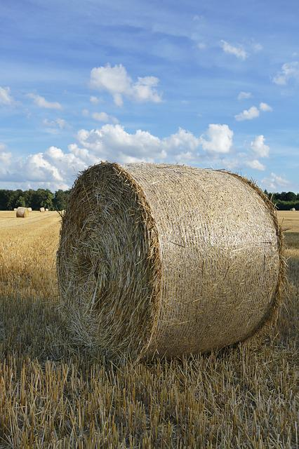 Nature, Hay Bales, Arable, Cereals, Field, Clouds, Sky