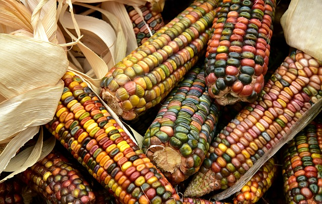 Corn, Harvest, Food, Ornamental Corn, Cereals