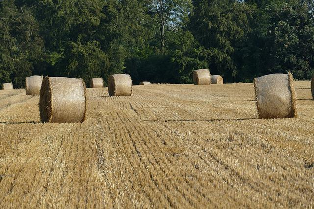 Nature, Hay Bales, Arable, Cereals, Field, Forest