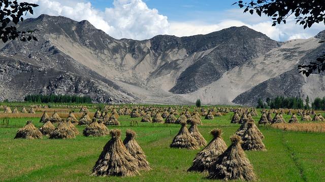 Tibet, Harvest, Millet, Landscape, Agriculture, Cereals