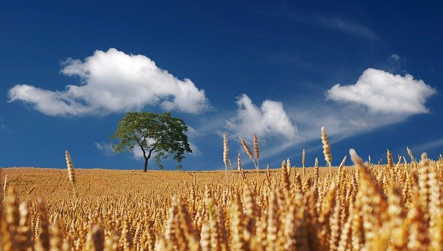 Summer, Sun, Sunshine, Cereals, Cornfield, Ripe, Mature