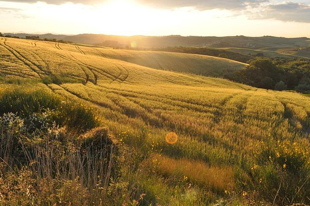 Field, Summer, Nature, Agriculture, Cereals, Italy