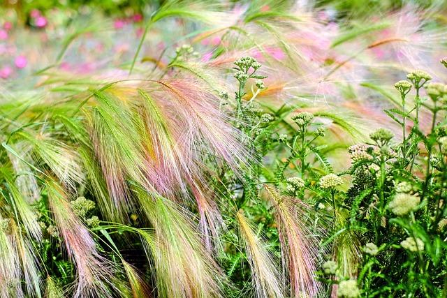 Barley, Cereals, Spike, Halm, Barley Field, Flowers