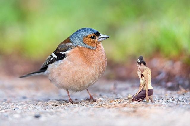 Bird, Chaffinch, Nature, Pen, Wild Birds, Asian