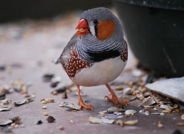 Bird, Wildlife, Nature, Animal, Beak, Chaffinch, Common