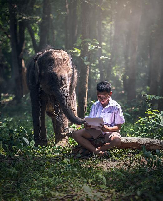 Elephant, Chained, Boy, Learning, Reading, Malaysia