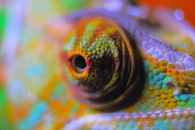 Chameleon Abstract, Chameleon, Reptile, Yemen Chameleon