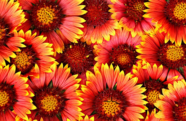 Background, Flowers, Bright, Chamomile, A Lot, Pattern