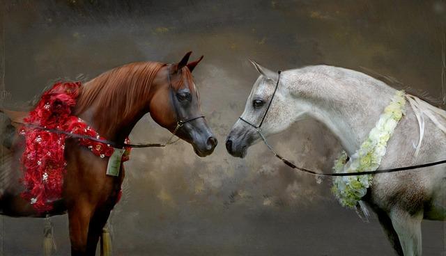 Champions, Arabian Horse, Arabian Horses, Horses, Show