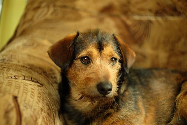 Dog House, Animals, Mammals, Charming