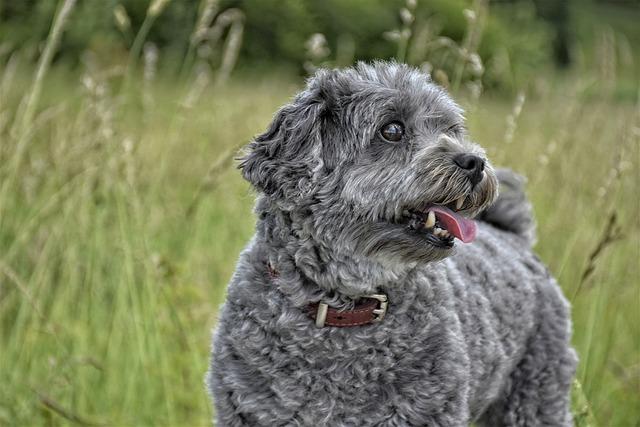Dog, Mammal, Cute, Charming, Fur, Funny, Animal World