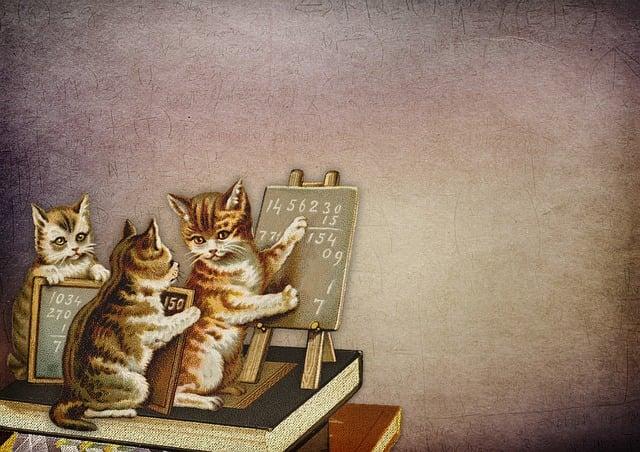 Vintage, Kitten, School, Kittens, Cat, Charming, Learn