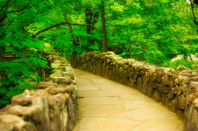 Rock City Gardens, Steinweg, Chattanooga, Forest, Trees