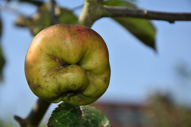 Apple, Face, Fash, Delicious, Cheerful, Healthy