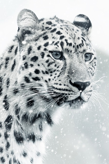 Leopard, Cheetah, Animal World, Animal, Mammal, Cat