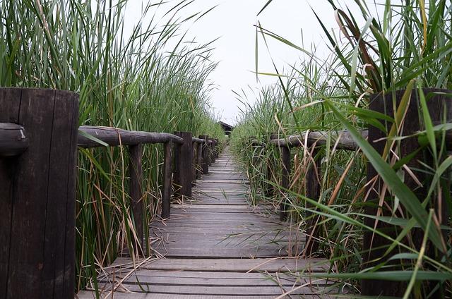 Henan, Chen Bridge, Wetlands