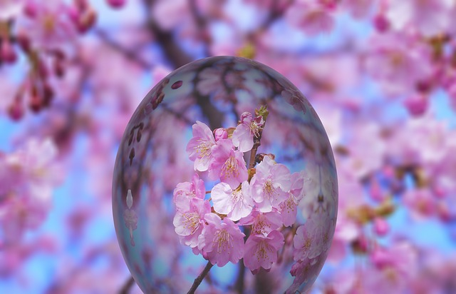 Easter, Egg, Easter Egg, Cherry Blossom, Blossom, Bloom