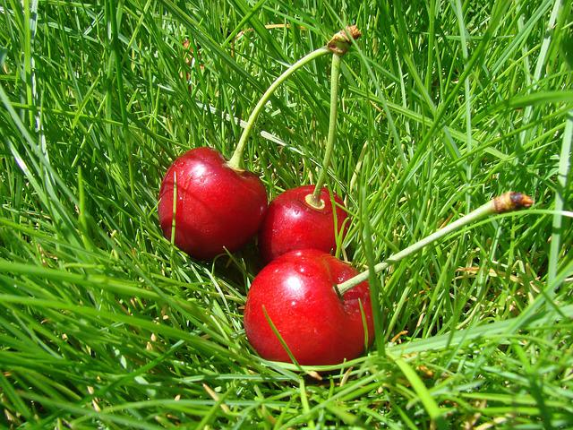 Cherry, In Grass