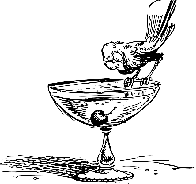 Cocktail, Glass, Cherry, Stemware, Bird