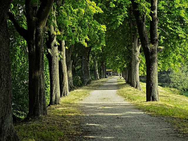 Avenue, Chestnut Avenue, Trees, Chestnut, Away, Nature
