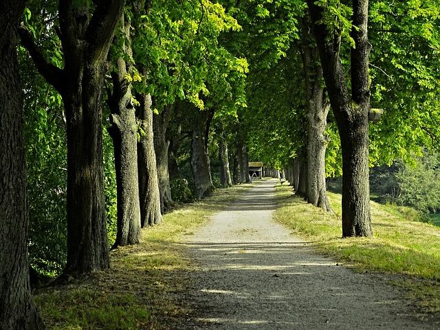 Avenue, Chestnut Avenue, Trees, Chestnut, Away, Nature