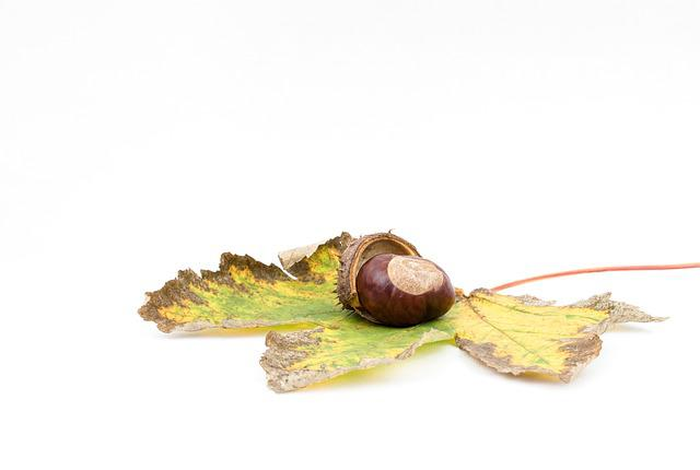 Chestnut, Autumn, Chestnut Fruit, Open Chestnut
