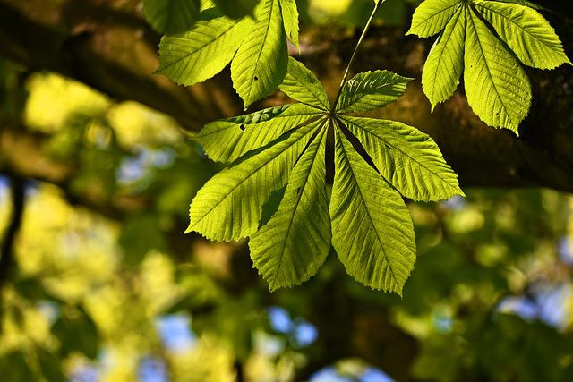Chestnut Leaf, Tree, Foliage, Leaves, Veins, Pattern