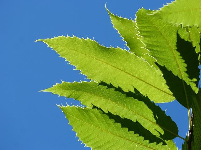 Chestnut Leaves, Brown, Translucent, Forest