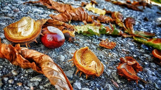 Autumn, Leaves, Chestnut, Asphalt, September