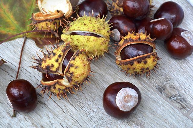 Chestnuts, Spikes, In Shell, Autumn, Horse Chestnut