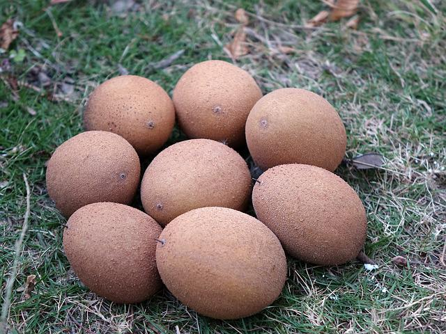 Manilkara Zapota, Renxinguo, Chi Iron Fruit, Fruit