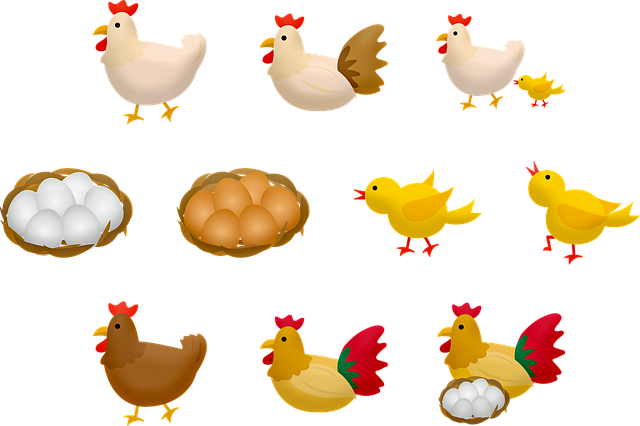 Chicken And Eggs, Baby Chick, Mother Hen, Eggs