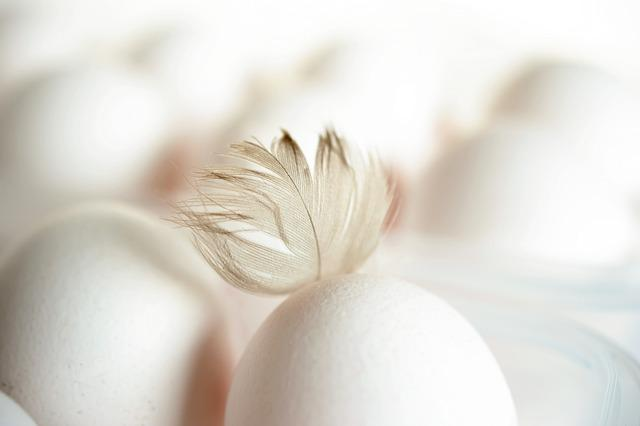 Egg, Feather, Chicken Feather, Hen's Egg, White Eggs